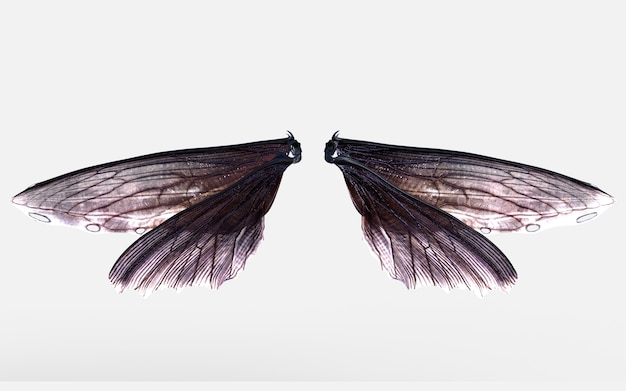 3d ilustracja wings of insect isolate na szarym tle z clipping path.