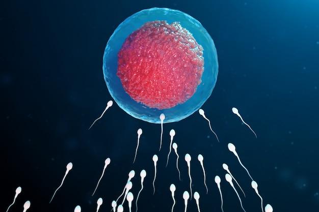 3d ilustracji plemnika i komórki jajowej, komórki jajowej. plemniki zbliżają się do komórki jajowej. nawożenie naturalne i naturalne. poczęcie początek nowego życia. komórka jajowa z czerwonym rdzeniem pod mikroskopem, ruch plemników