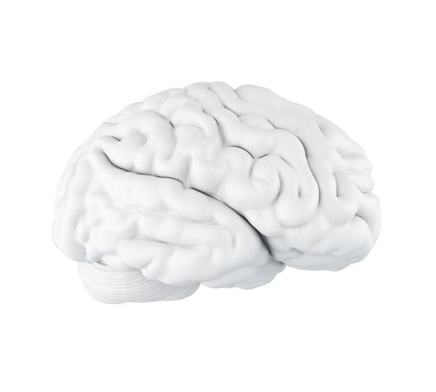 3d ludzki mózg.