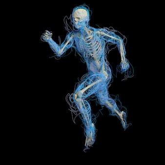 3d medyczna figura mężczyzny wykonana ze świecących splajnów