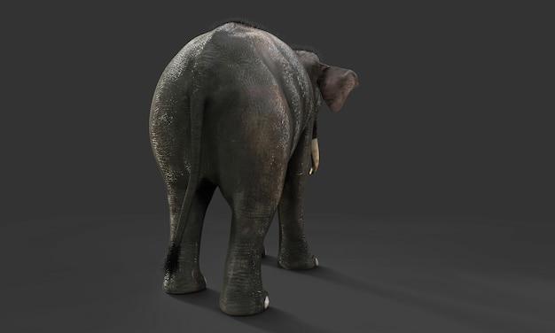 3d słoń odizolowywający na czarnym tle