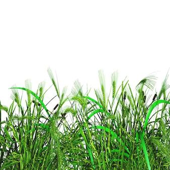 3D zielona trawa i banatka na białym tle