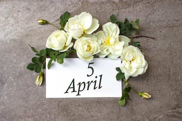 5 kwietnia. dzień 5 miesiąca, data kalendarzowa. białe róże obramowania na pastelowym szarym tle z datą kalendarzową. miesiąc wiosny, koncepcja dnia roku.