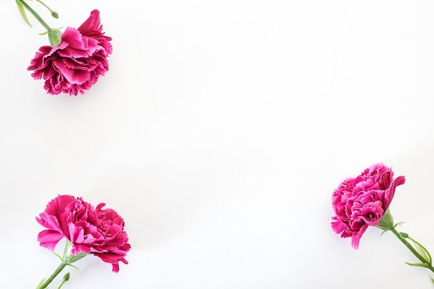 8 marca dzień kobiet goździk