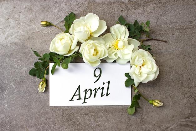 9 kwietnia. dzień 9 miesiąca, data kalendarzowa. białe róże obramowania na pastelowym szarym tle z datą kalendarzową. miesiąc wiosny, koncepcja dnia roku.