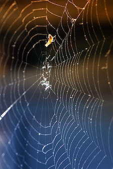 A close up of a spider web