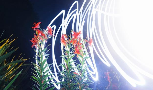 Abstrakcja: nocne kwiaty w promieniach jasnego błysku podobnego do błyskawicy