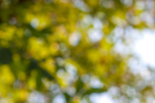 Abstrakcjonistyczna bokeh zieleń okrąża tło