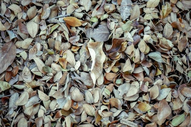 Abstrakcjonistyczna tło tekstury jesień spadać opuszcza na brown las ziemi