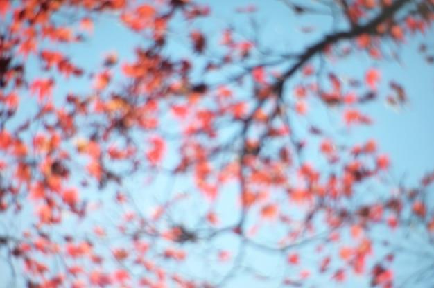 Abstrakcjonistyczna zamazana natura kwiatu kwiatu gałąź z wschodem słońca.