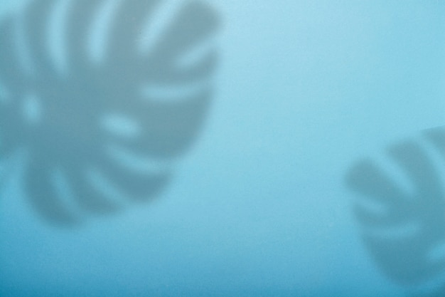 Abstrakcjonistyczny błękitny tło i cień tropikalna monstera roślina.