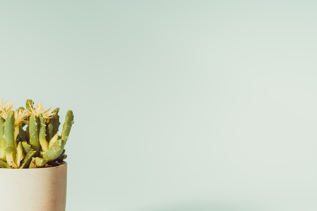 Abstrakcjonistyczny kolor kaktus na garnku z kopii przestrzenią