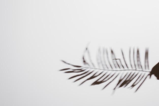 Abstrakcjonistyczny naturalny liścia cień na białym tle