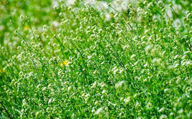 Abstrakcjonistyczny okwitnięcie kwitnie na polu