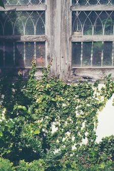 Abstrakcjonistyczny rośliny ściany tło zielona pełzacz roślina na grunge domu starej ścianie