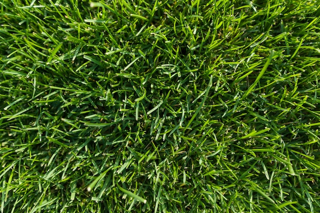 Abstrakcjonistyczny tekstury tło, naturalna jaskrawa - zielona trawa