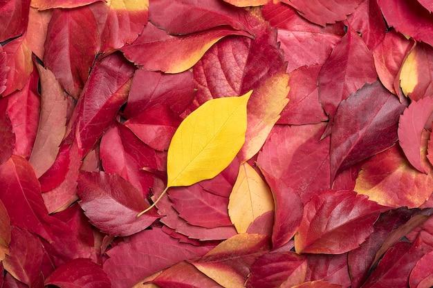 Abstrakcjonistyczny tło spadać jesień kolor żółty i czerwień opuszcza.