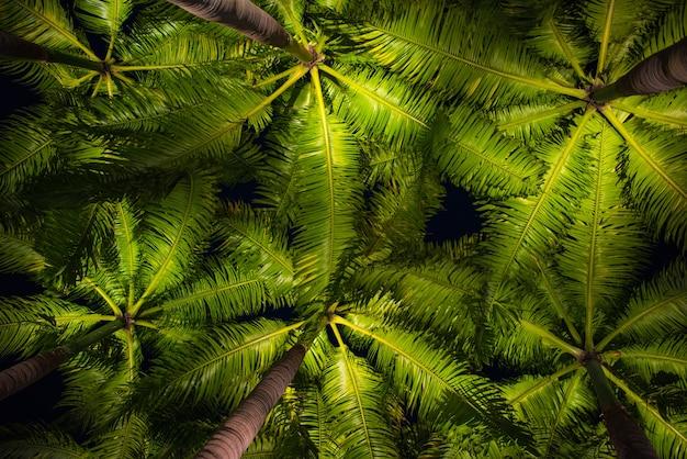 Abstrakcyjne backgound liści palmowych nisko kąt widzenia światła oświetlone w czasie nocy