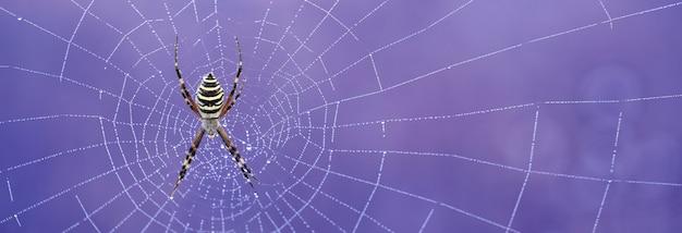 Abstrakcyjne tło. pajęczyna na niebieskim tle. naturalna tekstura.