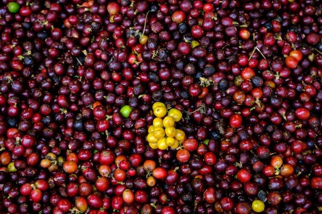 Abstrakcyjne tło surowe wiśnie i czerwone żółte ziarna kawy