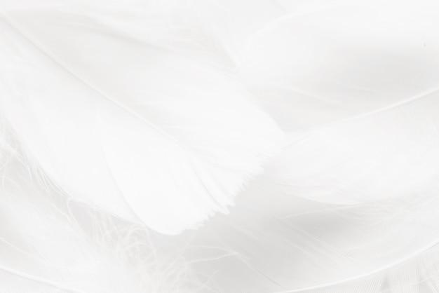 Abstrakcyjne tło. tekstura. pastelowe kolorowe puszyste ptasie pióra tło