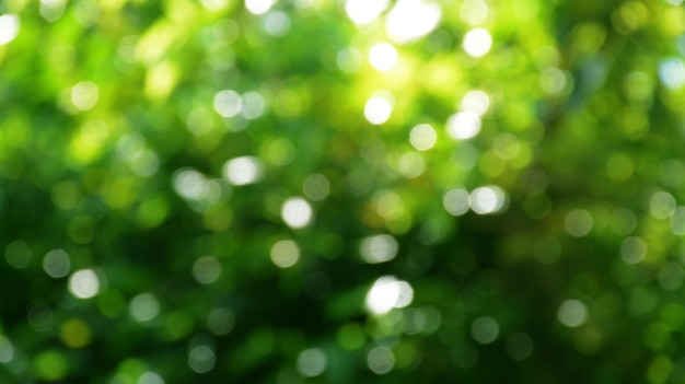 Abstrakcyjny charakter bokeh tło zielone wiosenne liście pięknie rozmyte w zielony bokeh