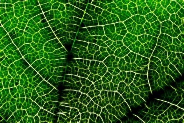 Abstrakcyjny liść makro