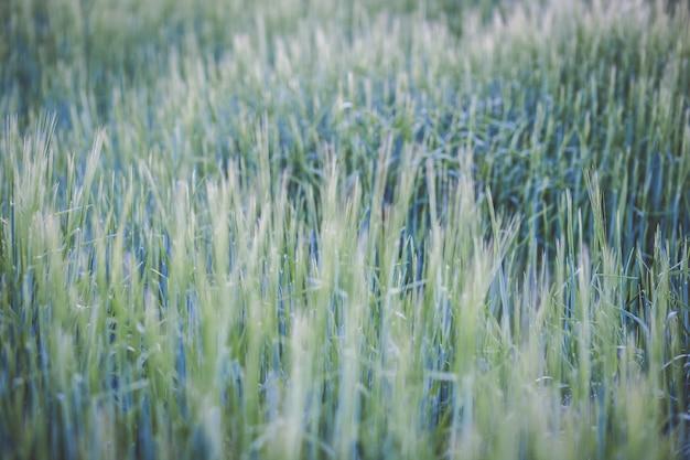 Abstrakcyjny obraz tekstury wysokiej jakości trawy