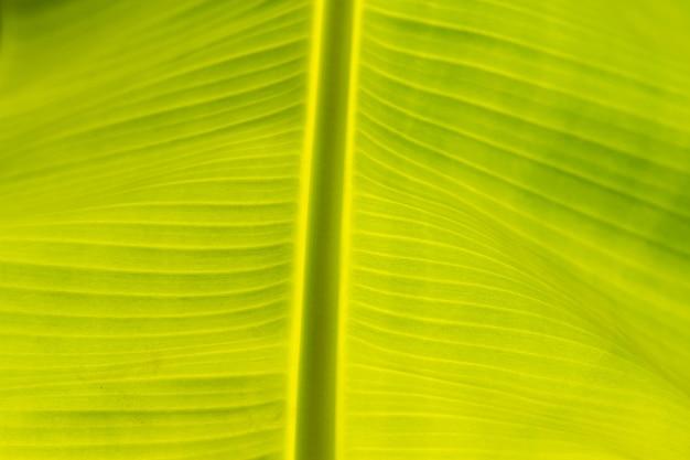 Abstrakt bananowy liścia tło