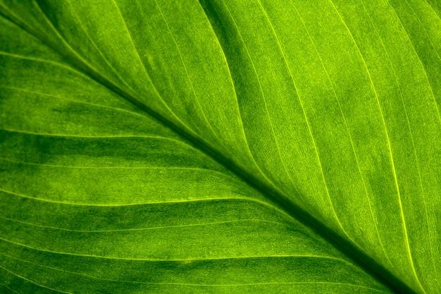 Abstrakt natury pasiasty tło, rocznika brzmienie. zielony teksturowany liść rośliny. naturalne tło eko.