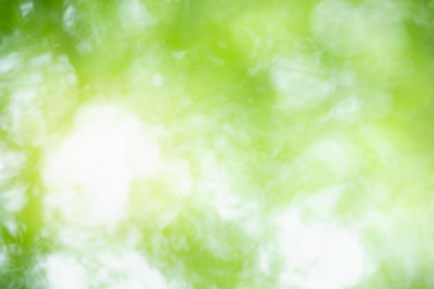 Abstrakt zamazywał z ostrości i zamazywał zielonego liścia tło pod światłem słonecznym z bokeh i kopii przestrzenią używać jako tło naturalnych roślin krajobraz, ekologii tapety pojęcie.