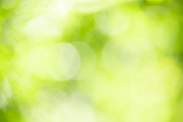 Abstrakt zamazywał z ostrości i zamazywał zielonego liścia tło pod światłem słonecznym z bokeh i kopii przestrzenią używać jako tło naturalnych roślin krajobraz