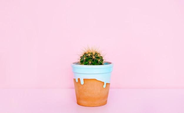Сactus w glinianym garnku. rośliny domowe.