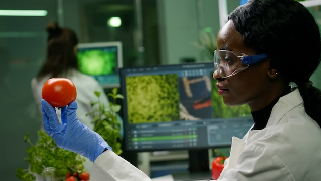 Afrykańska naukowiec kobieta patrząca na pomidora, podczas gdy jej koleżanka wpisuje test dna na komputerze w tle