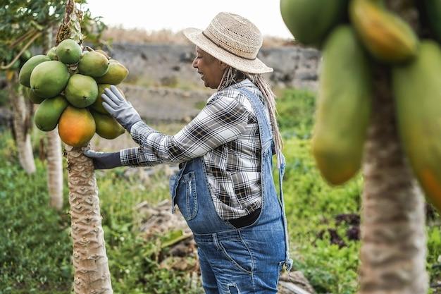 Afrykańska rolniczka pracująca w ogrodzie podczas zbierania owoców papai - focus on hat
