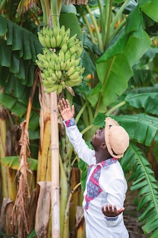 Afrykańska średniorolna mężczyzna pozycja z bananowym drzewem w ekologicznym gospodarstwie rolnym rolnictwa lub uprawy pojęcie
