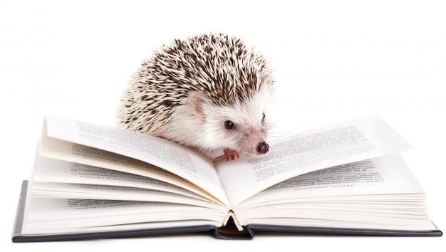 Afrykański jeż na bielu i książce
