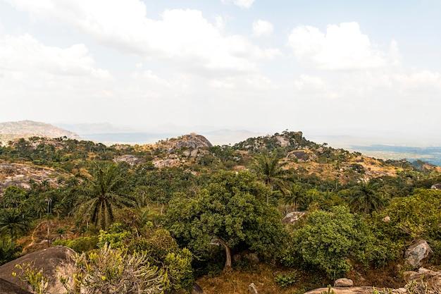 Afrykański krajobraz przyrody z drzewami i niebem