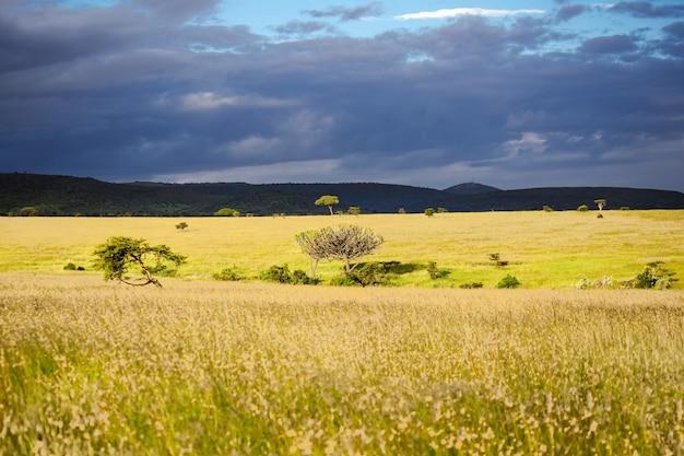 Afrykański krajobraz sawanny, park narodowy masai mara, kenia, afryka