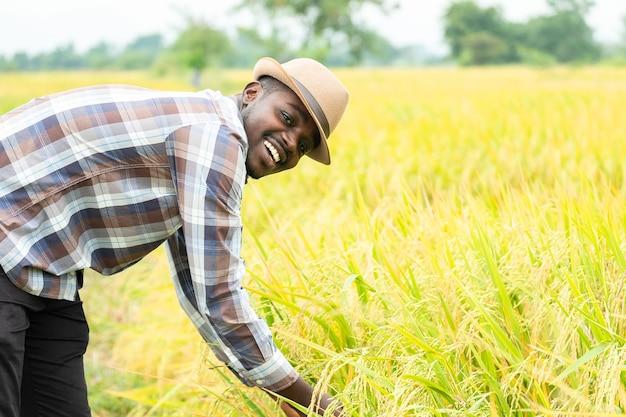 Afrykański rolnik stojący w ekologicznym polu ryżowym z uśmiechem i szczęśliwym. koncepcja rolnictwa lub uprawy