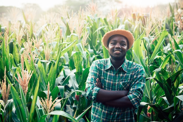 Afrykański rolnik z kapeluszem stoi w polu plantacji kukurydzy