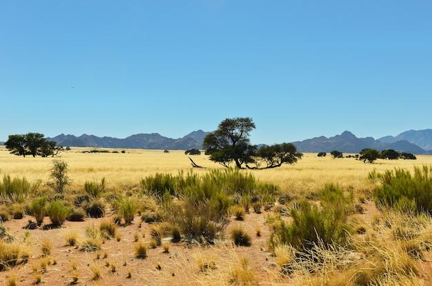 Afrykański sawanna krajobraz, namibia, południowa afryka