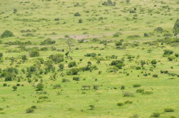 Afrykański sawanna krajobraz, południowa afryka