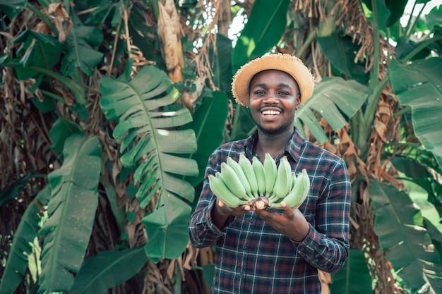 Afrykański średniorolny mężczyzna mienia banan przy organicznie gospodarstwem rolnym z uśmiechem i szczęśliwy rolnictwa lub uprawy pojęcie