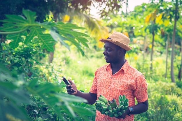 Afrykański średniorolny mienie banan i smartphone przy organicznie gospodarstwem rolnym
