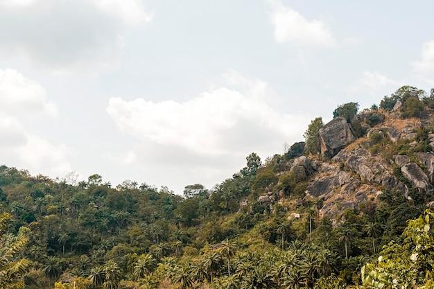 Afrykański widok przyrody z drzewami i roślinnością