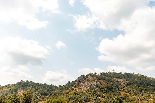 Afrykański widok przyrody z roślinnością i drzewami