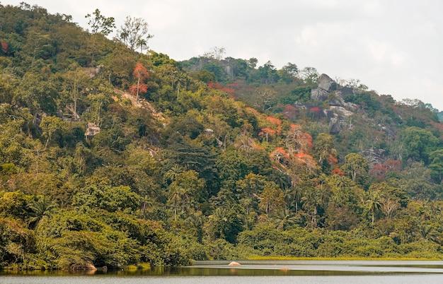 Afrykański widok przyrody z roślinnością i górami