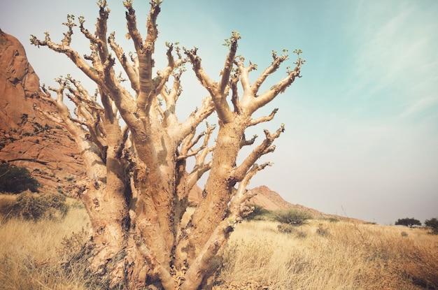 Afrykańskie krajobrazy - gorący żółty krzew, drzewa i błękitne niebo. koncepcyjne tło afrykańskie.