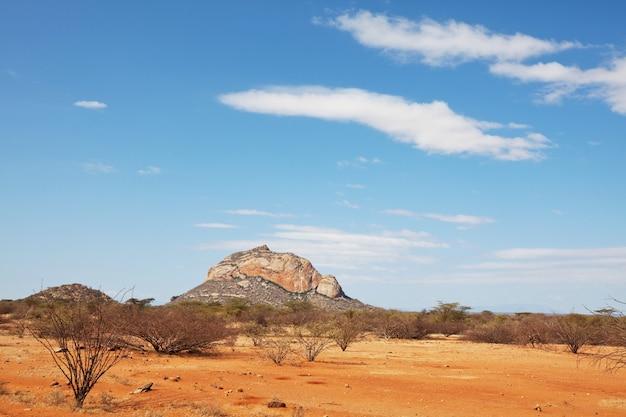 Afrykańskie krajobrazy - ostry żółty krzew, drzewa i błękitne niebo.